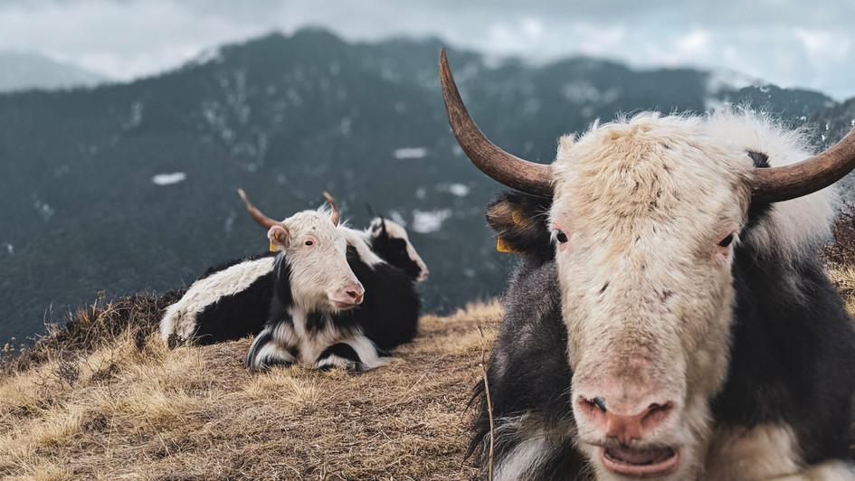 High Hills - Nepal