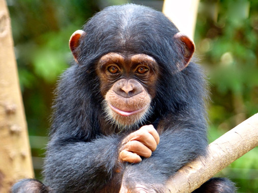Staying In The Jungle At Tacugama Chimpanzee Sanctuary
