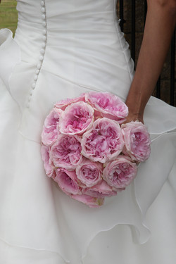 david austen roses  (2)