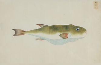 Keiga Vissen-0008.jpg