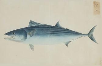 Keiga Vissen-0006.jpg