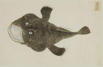 Keiga Vissen-0016.jpg