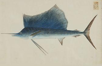 Keiga Vissen-0020.jpg