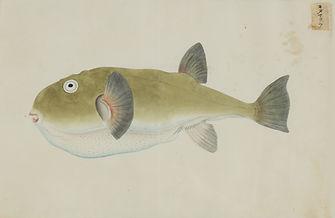Keiga Vissen-0019.jpg