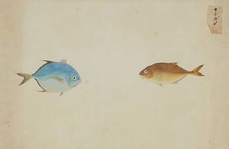 Keiga Vissen-0001.jpg