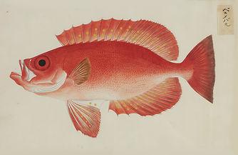 Keiga Vissen-0005.jpg