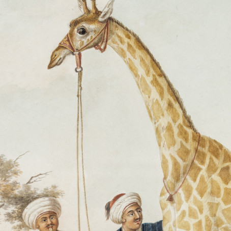 The King's Camelopard