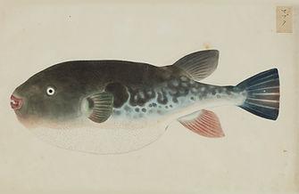 Keiga Vissen-0021.jpg