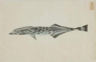 Keiga Vissen-0013.jpg
