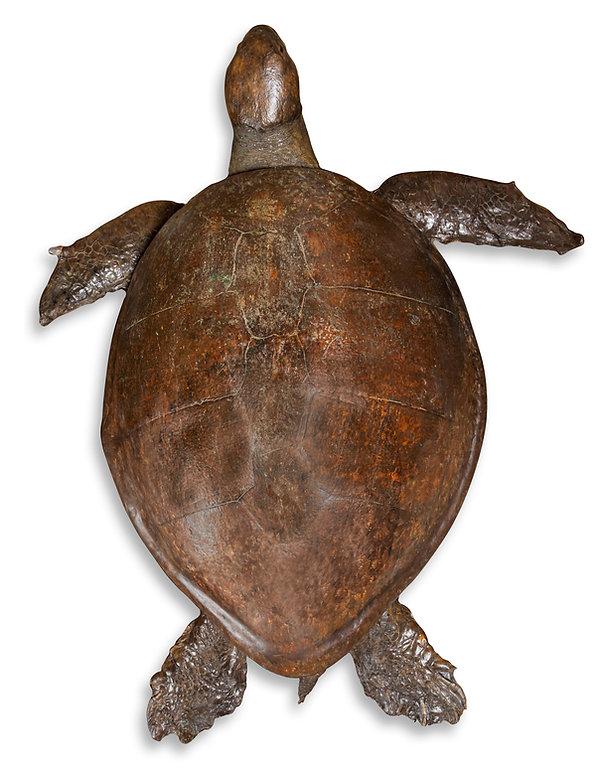 Turtle Top.jpg