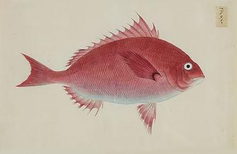 Keiga Vissen-0015.jpg