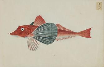 Keiga Vissen-0022.jpg