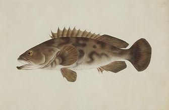 Keiga Vissen-0018.jpg