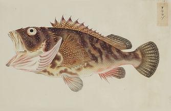 Keiga Vissen-0004.jpg