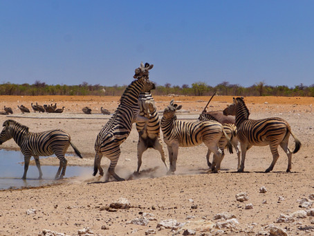 Namibia 🇳🇦 | Heading down Skeleton Coast and watching wildlife in Etosha Park