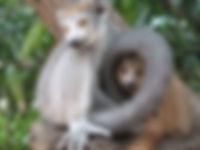 Le Manguier Ramena