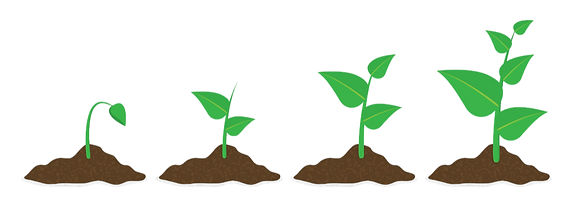 phases-plant-growing-planting-tree-infog