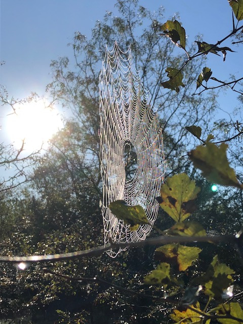 A spider web in the sunlight