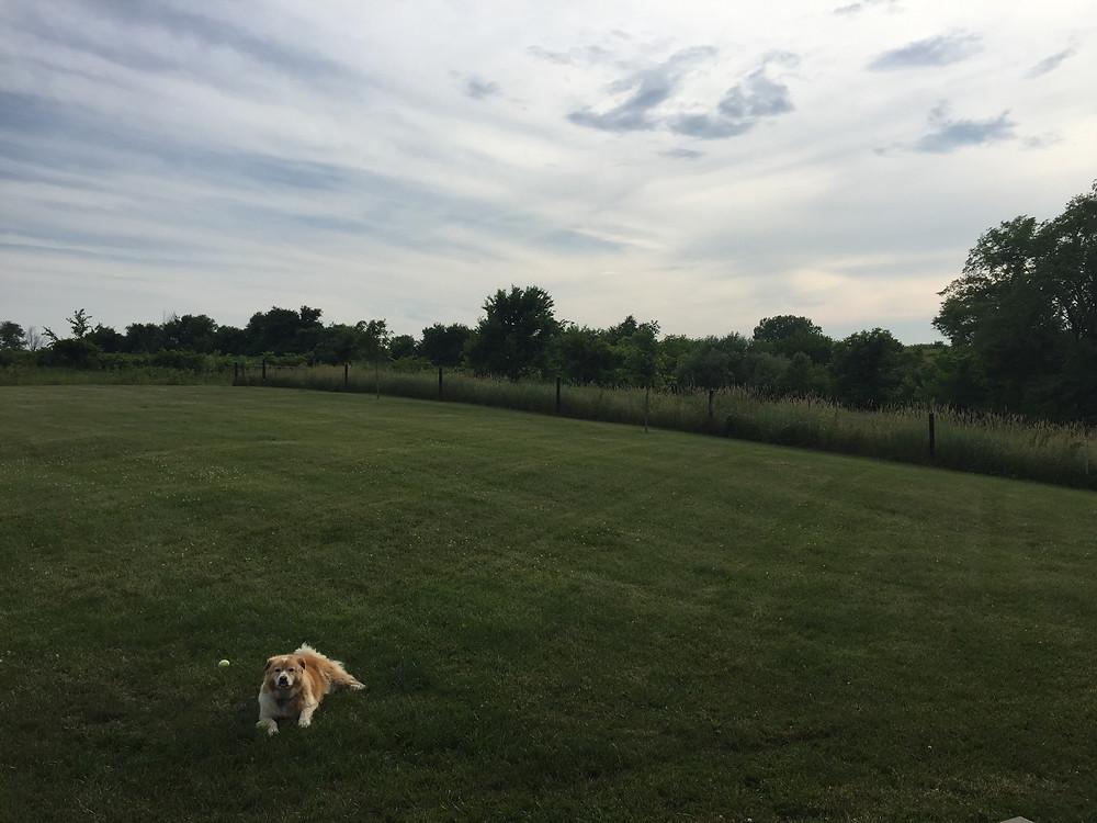 Happy Dog on the Farm