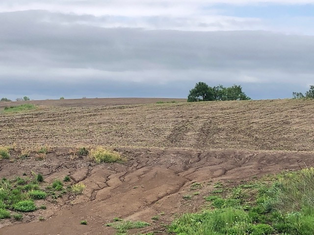 a dirt field with tiny plants in rows