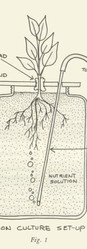 Diagram for hydroponic plant growth