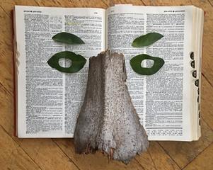 Bookface (Gaze)
