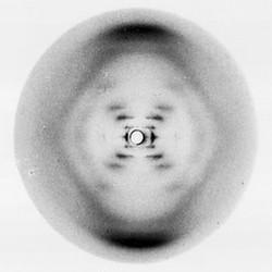photograph 51 (Rosalind Franklin)