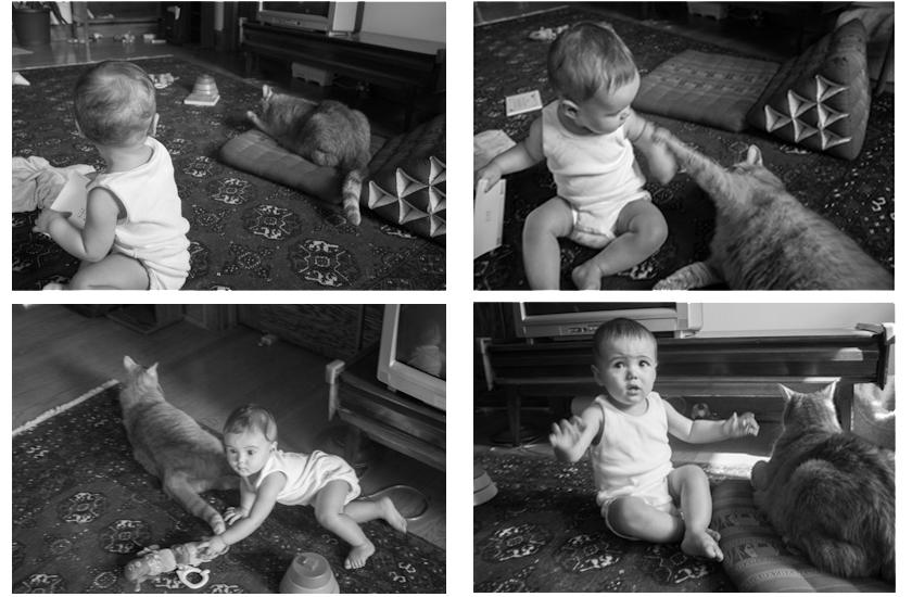 Stella & feline