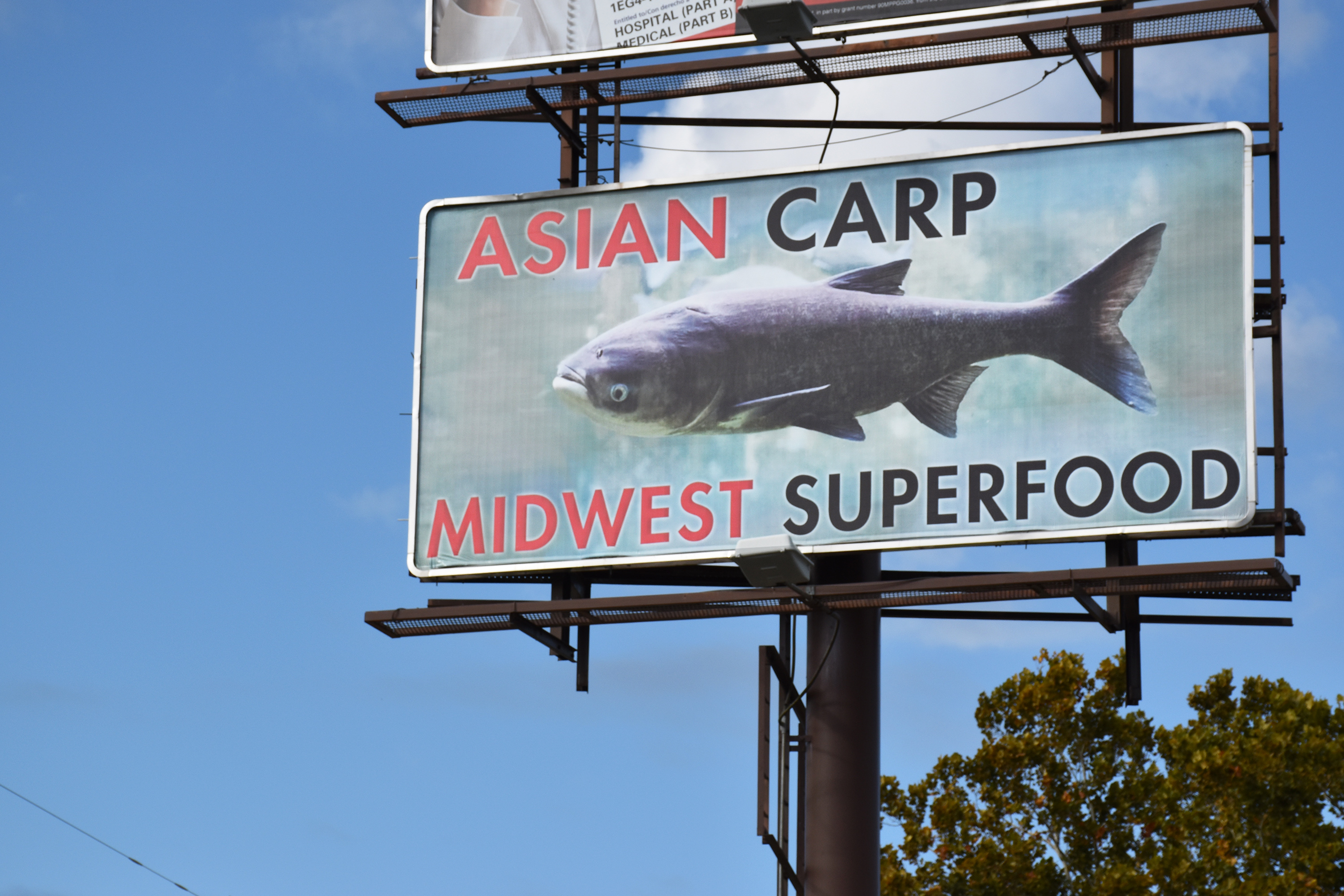 Asian_Carp_billboard_superfood