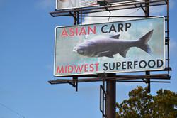 Asian Carp as a Superfood
