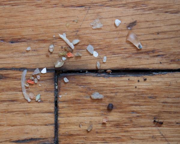 Ants a la Spoerri