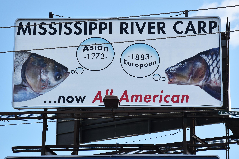 All-American Carp