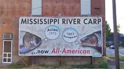 All American Carp