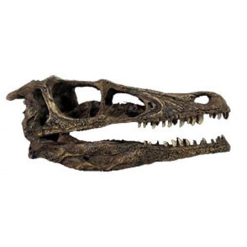 Crânio de 'Velociraptor'