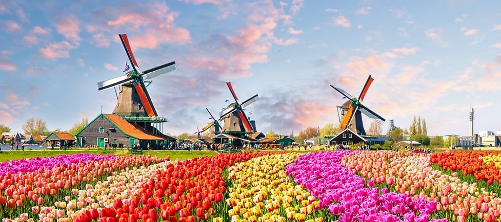 Landscape-with-tulips-traditional-dutch-