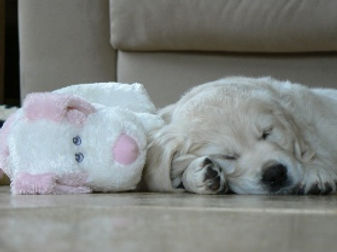 Puppy pic 1.jpg