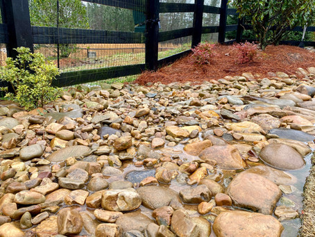 4 Ways to Prevent Flooding in your Backyard