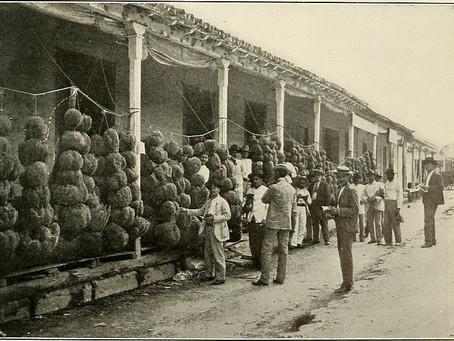 """Cuban Sponges Scrub World"": Sponge Fishing in Cuba's Gulf of Batabanó (1890-1940)"