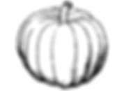 pumpkin clipart.png