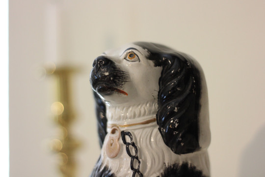 B dog.JPG