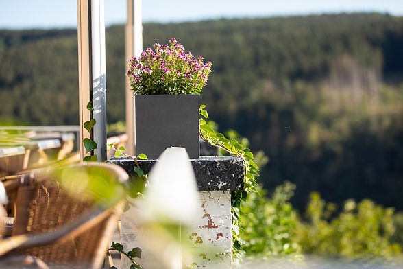 Paarse bloemen op het terras van Hostellerie Beau Site in Trois-Ponts