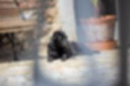 Hond B&B Haspenhoeve in Herstappe bij Tongeren