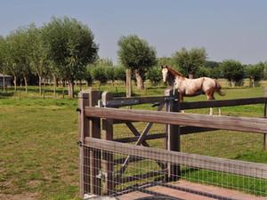 Paardenafsluitingen