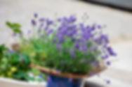 Bloemen bij B&B Haspenhoeve in Herstappe