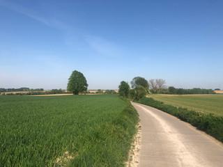 Wandelen & fietsen