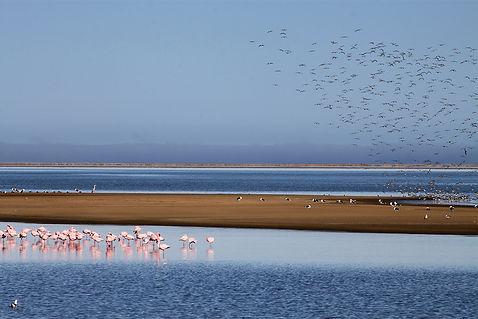 Birds Paradise.jpg