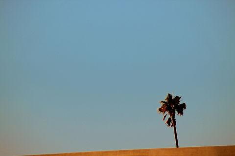 Palm Vegas