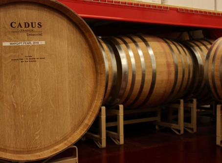 Winery Update- Varietal Crash Course