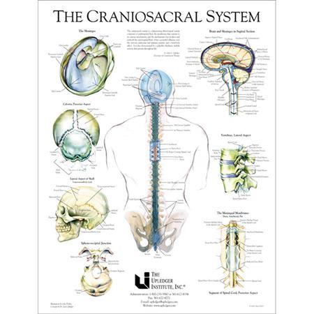 Cranio sacral chart.jpg