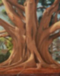 Margherita Sanguineti Art Moreton Fig Trees